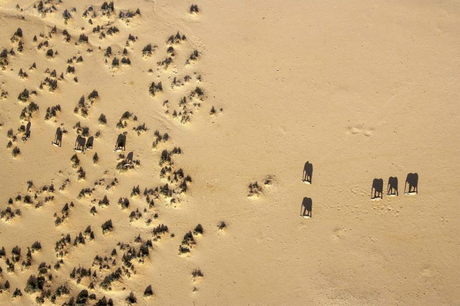elephant-shadows