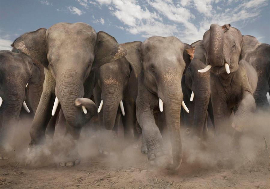 elephant-stampede