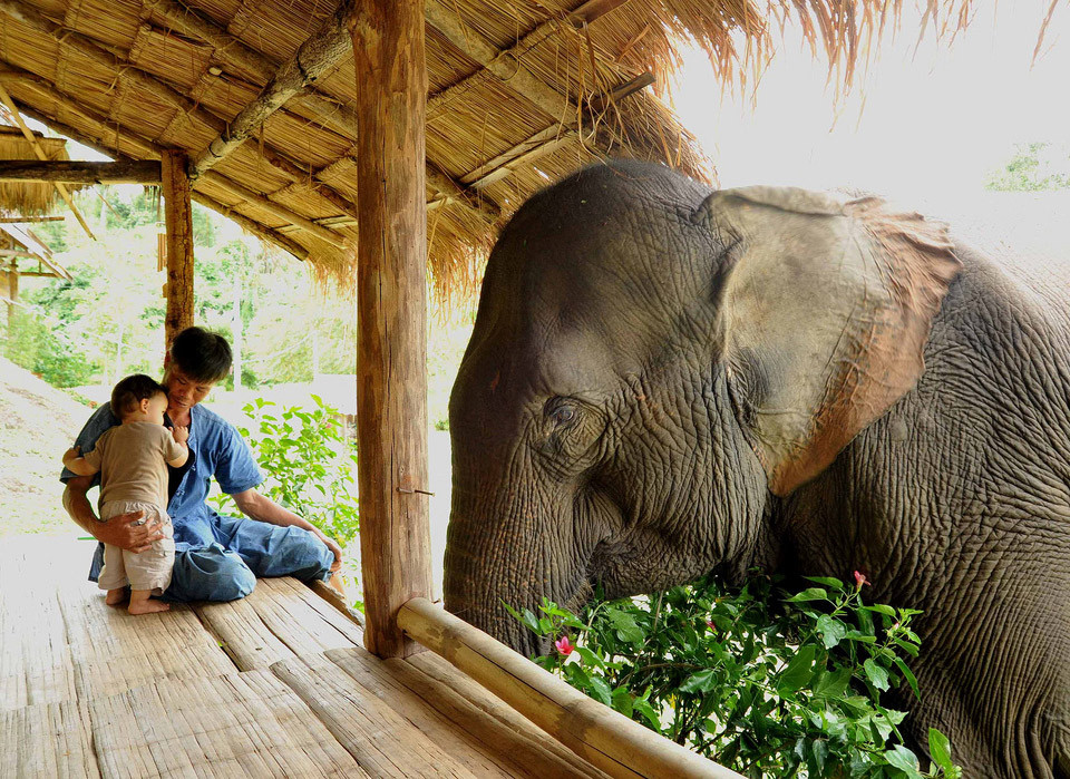 father-son-and-elephant