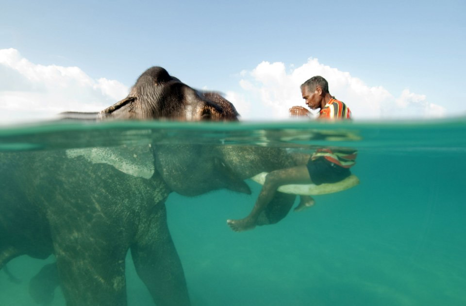 swimming-with-the-elephant
