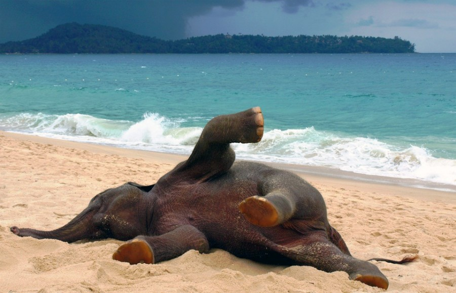 young-elephant-playing-at-the-beach