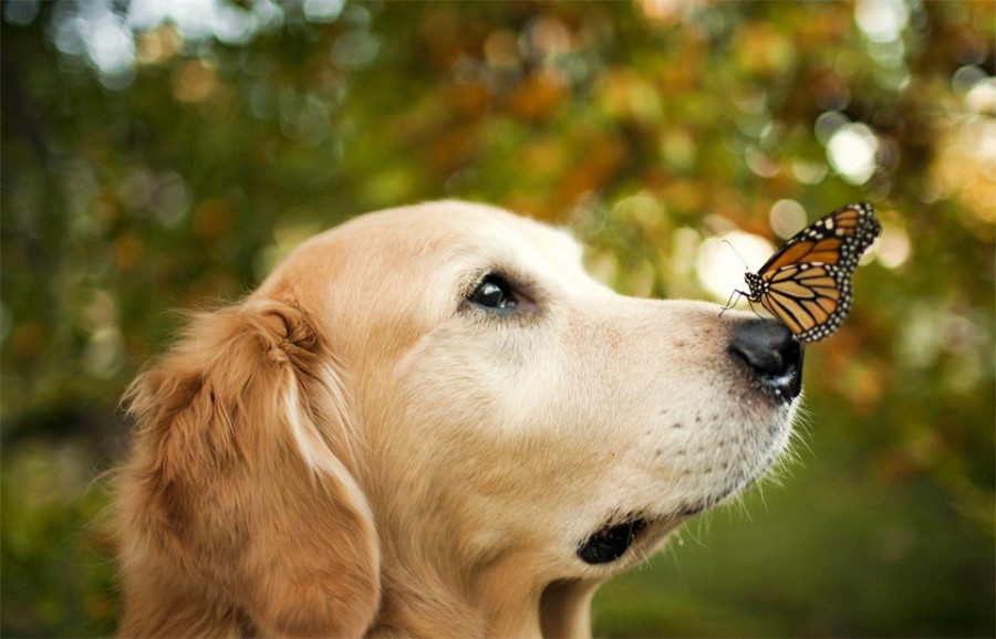 a-dog-and-the-butterfly