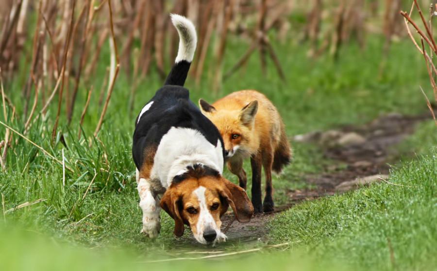 worlds-worst-hunting-dog