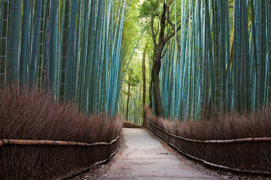 bamboo-forest-japan 5