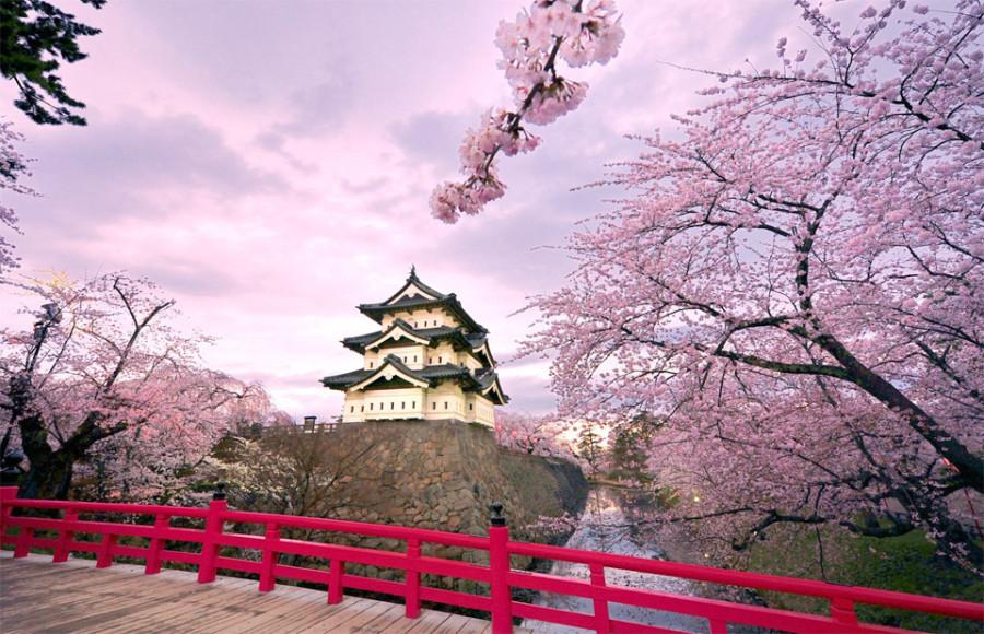 cherry-blossoms-hirosaki-castle-japan 4