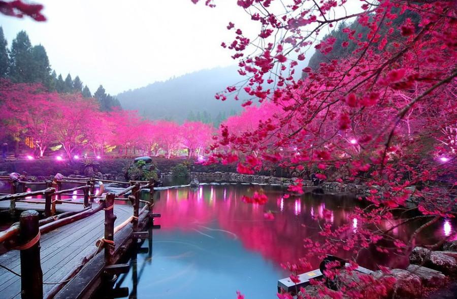 lighted-cherry-blossom-lake-japan 11
