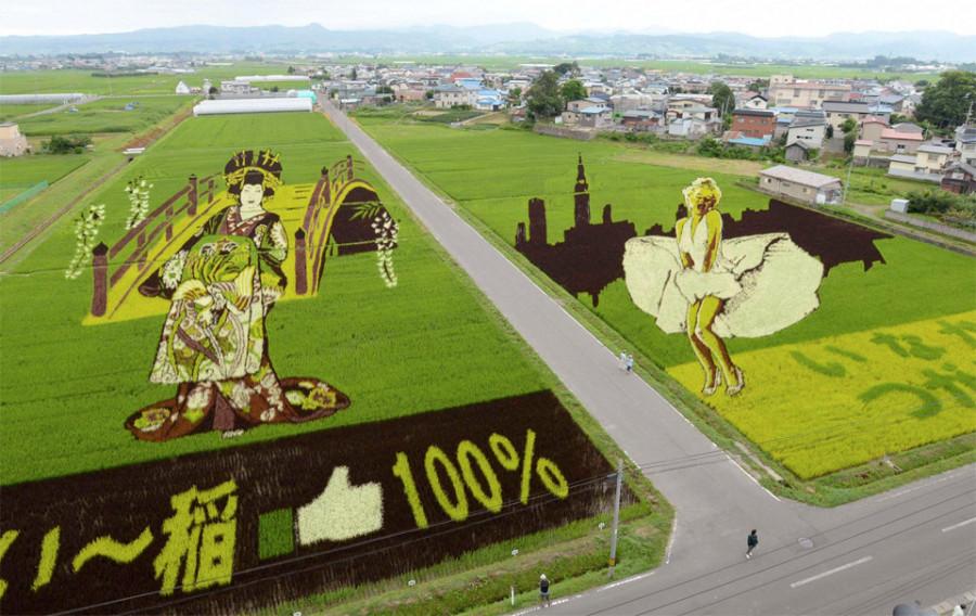 rice-field-art-japan 10