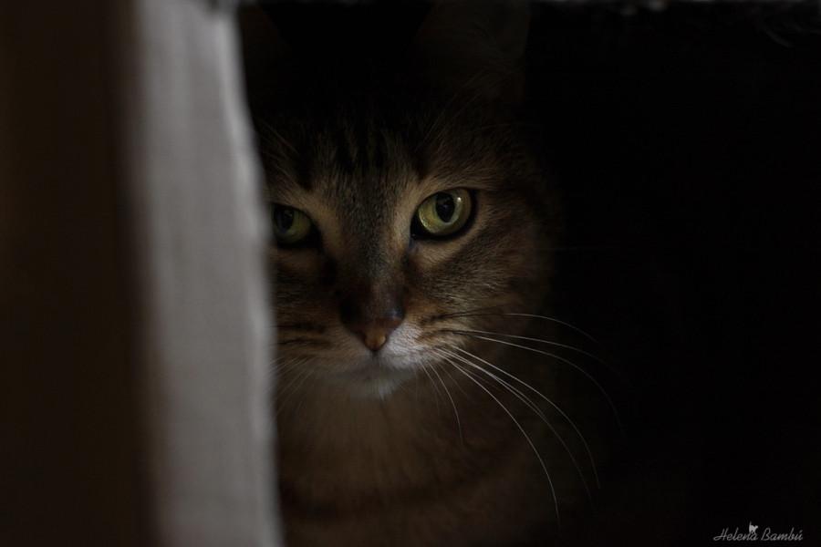 cats_02