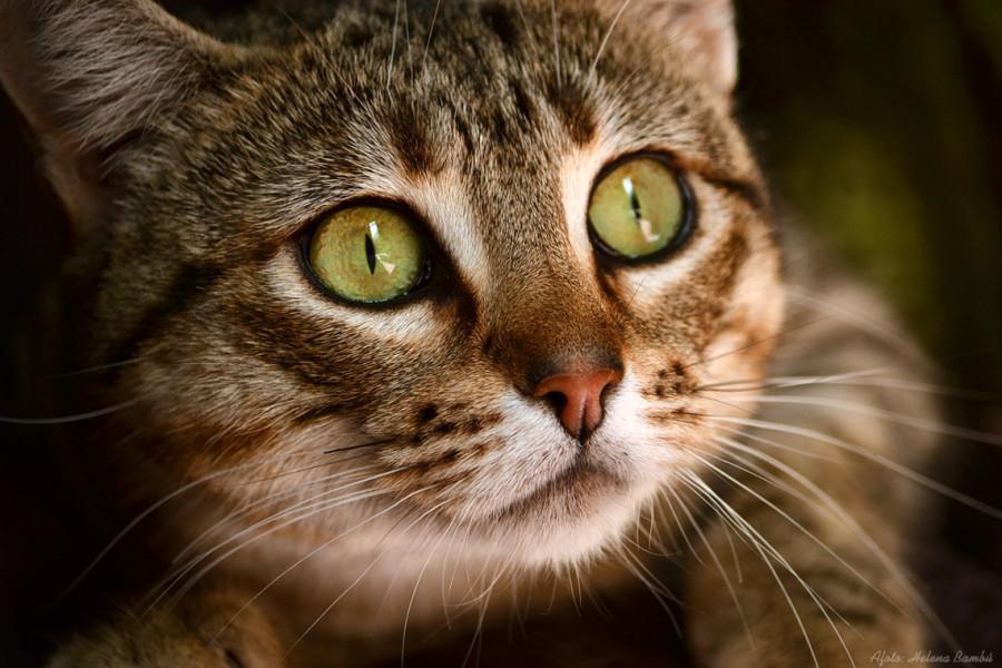 cats_03