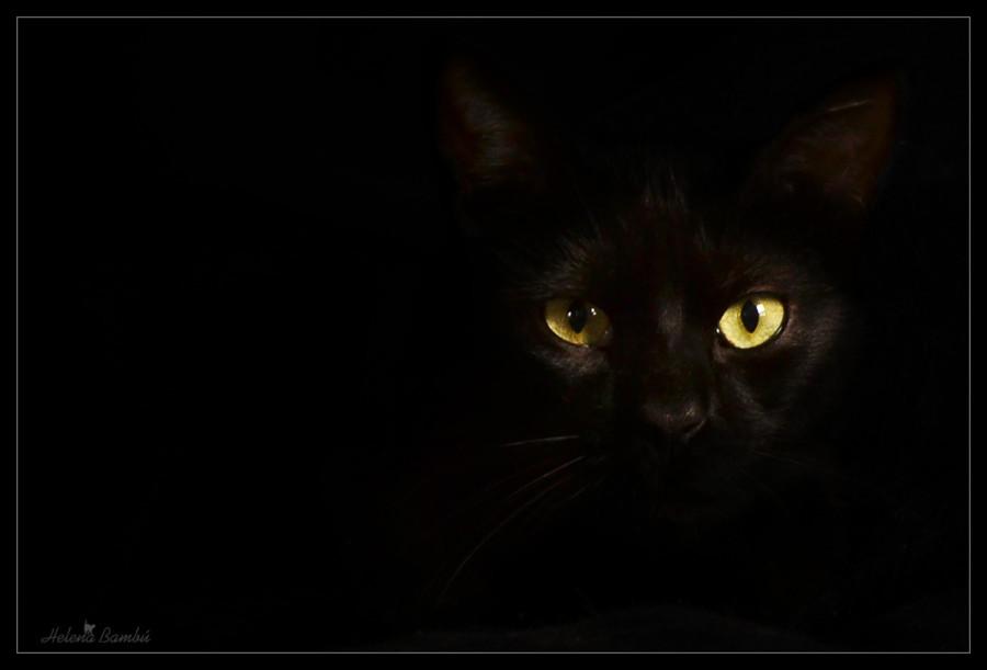 cats_04
