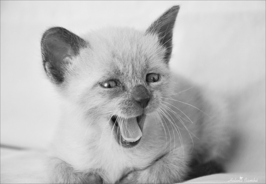 cats_07