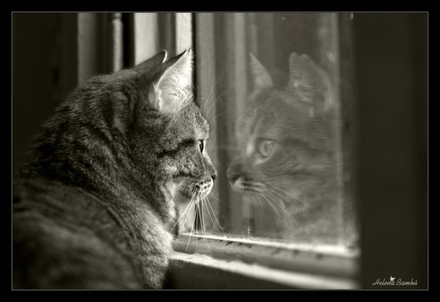 cats_09
