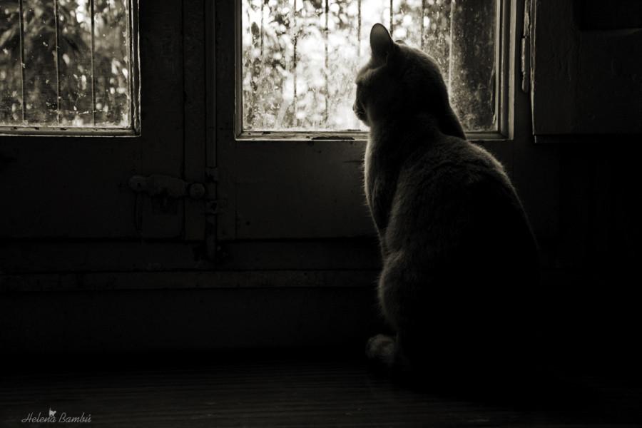 cats_14