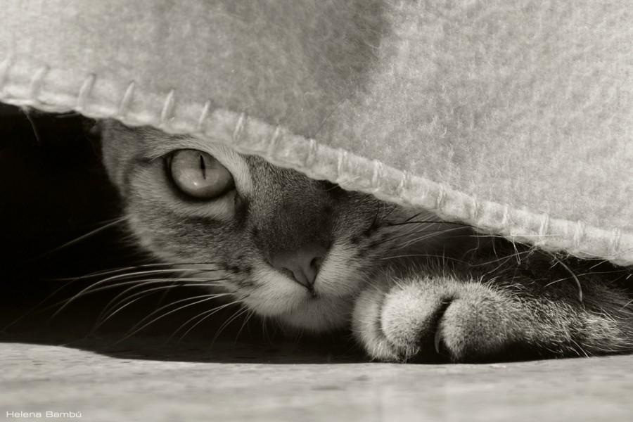 cats_16