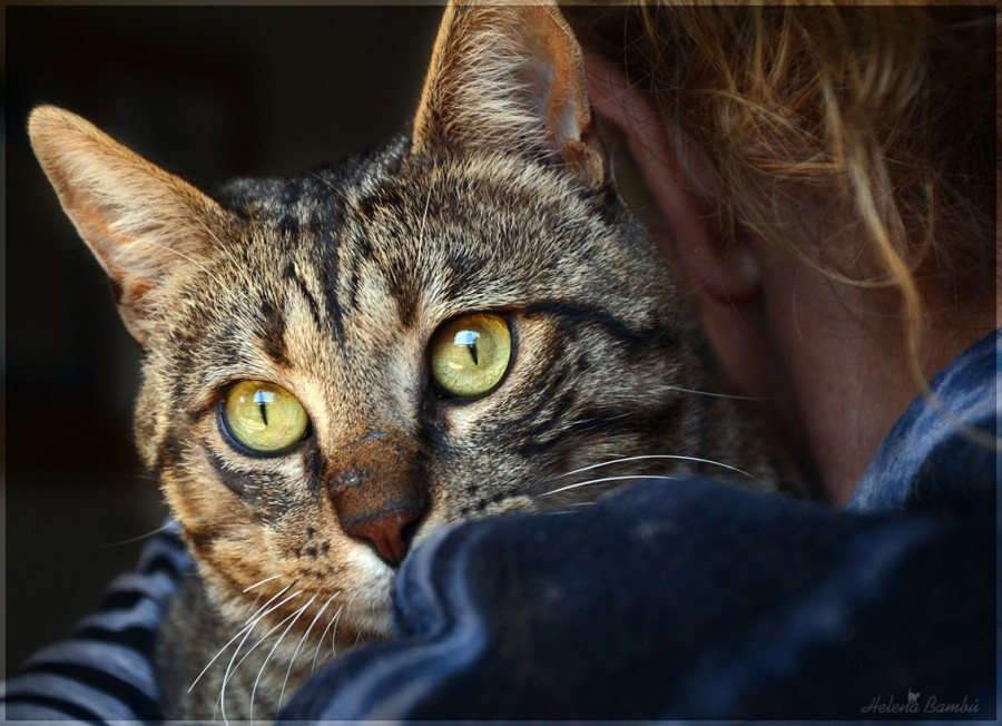 cats_17