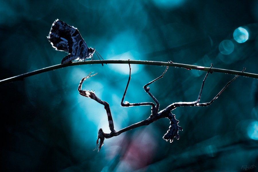 butterfly-mantis