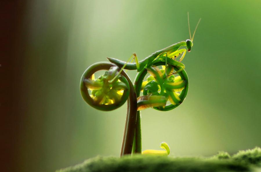 mantis-bike