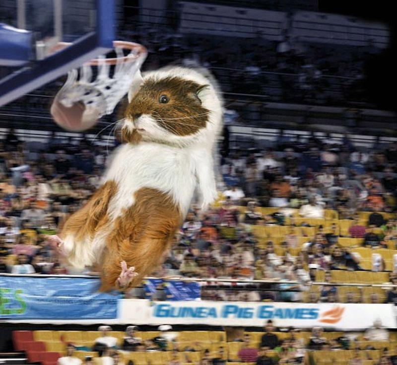 «Guinea Pig Games 2013»