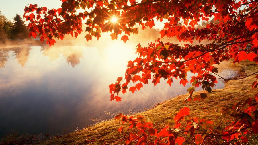 fall_02