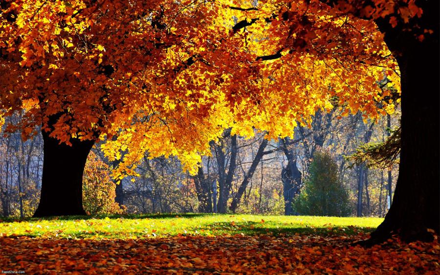 fall_04
