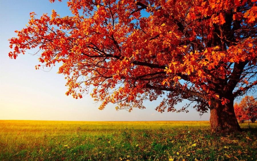 fall_05