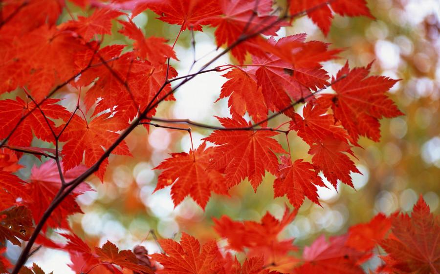 fall_06