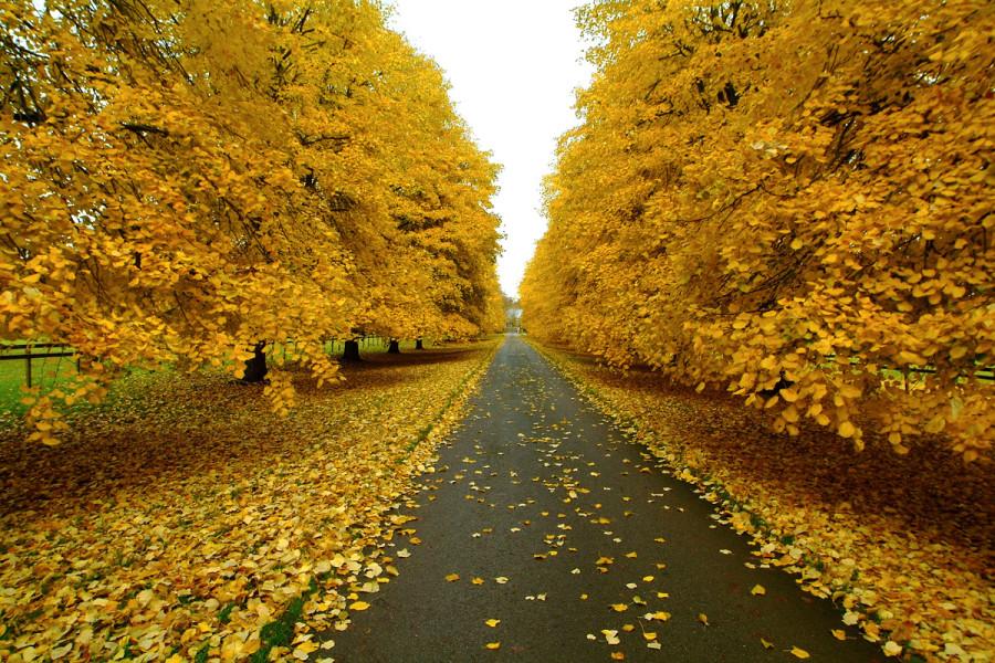 fall_08
