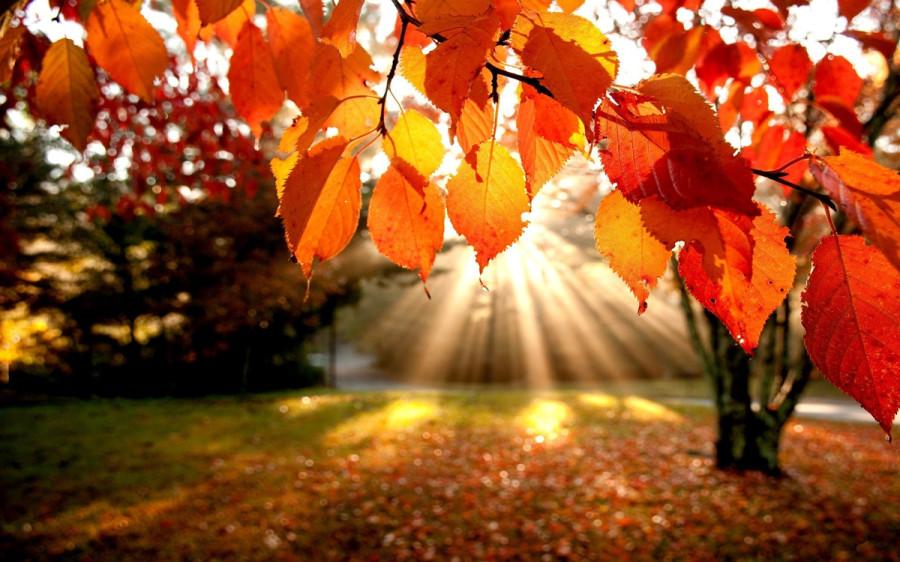 fall_10