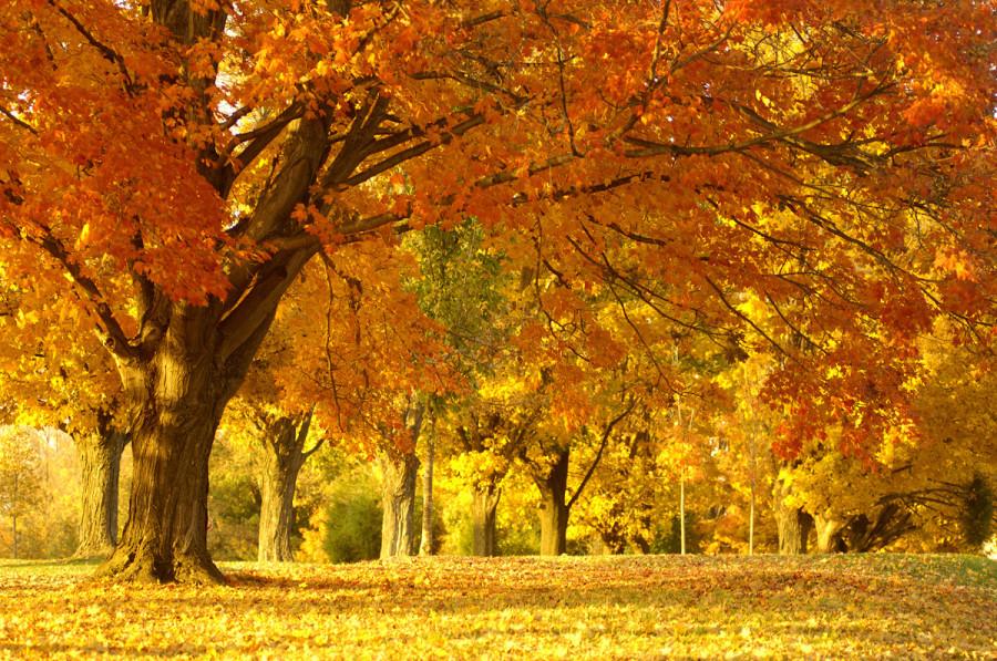 fall_11