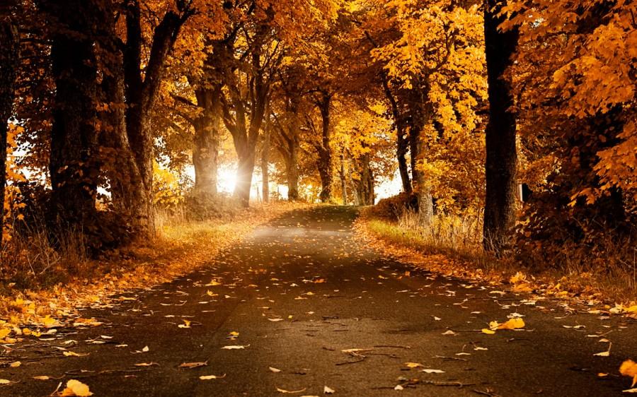 fall_12