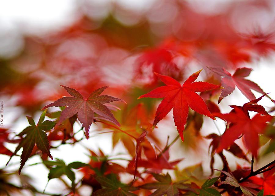 fall_14