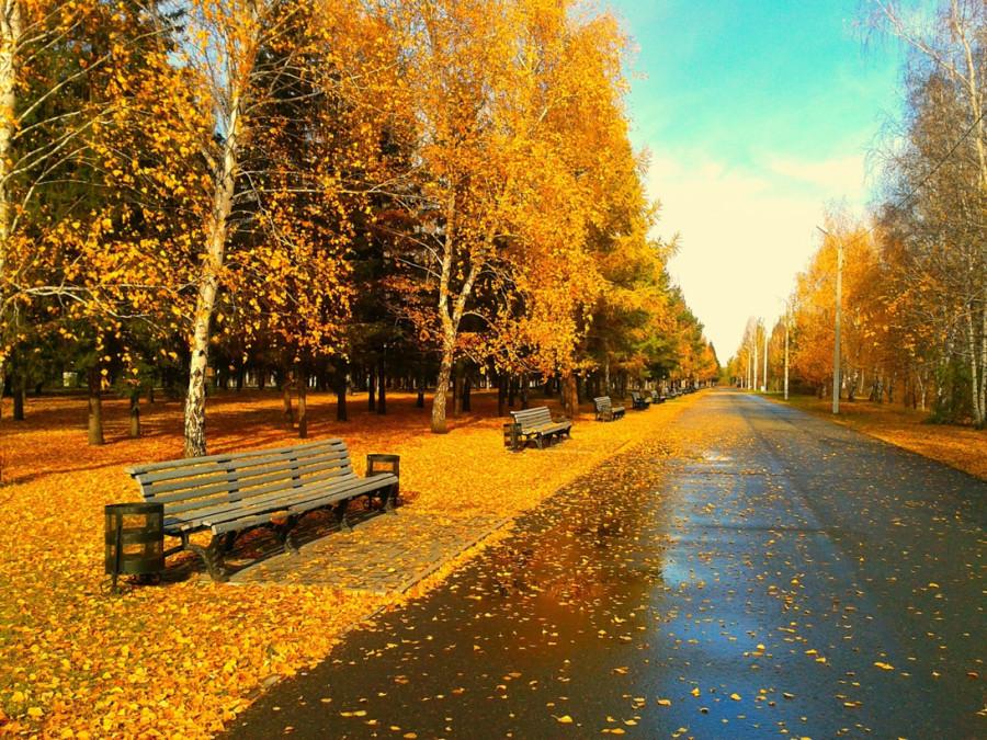 fall_15