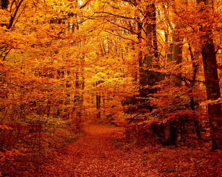fall_16