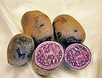 синяя картошка