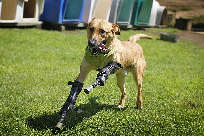 собака на протезах