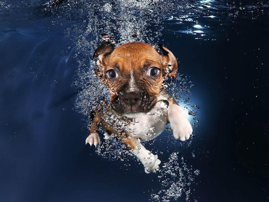 Underwater Puppies Ava