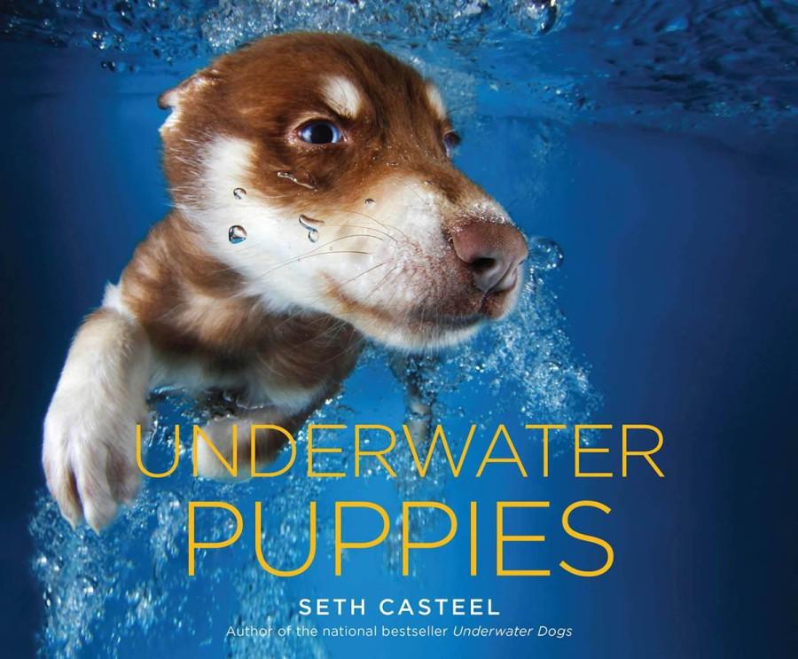 Underwater Puppies book cover