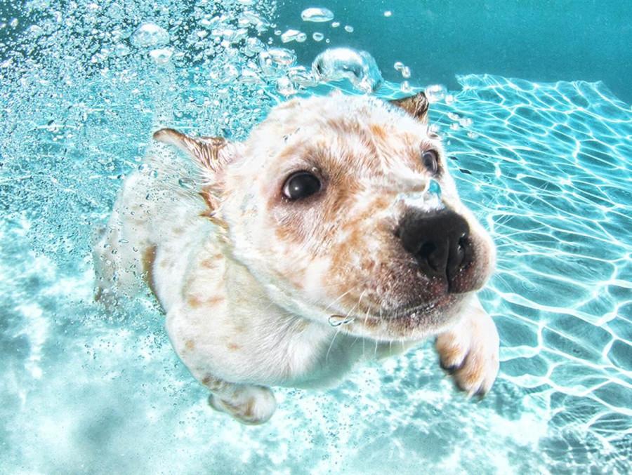 Underwater Puppies Corey