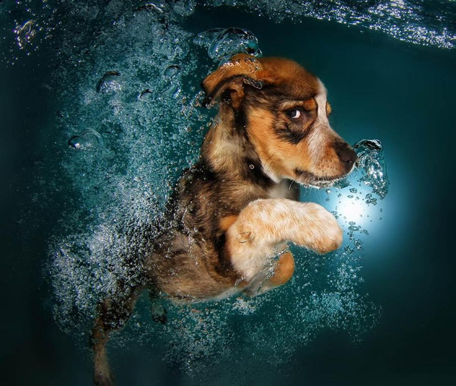 Underwater Puppies Ginger