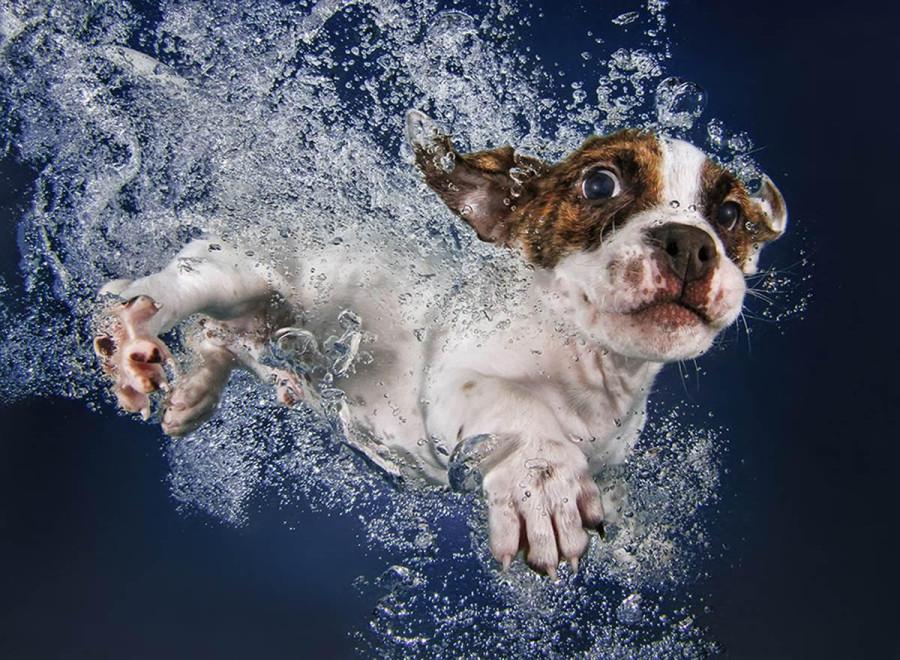 Underwater Puppies Popsicle