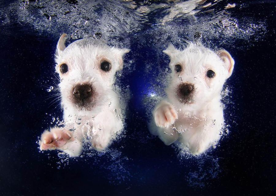 Underwater Puppies Pringles and Pickme