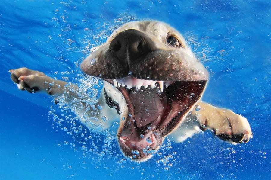 Underwater Puppies Reason