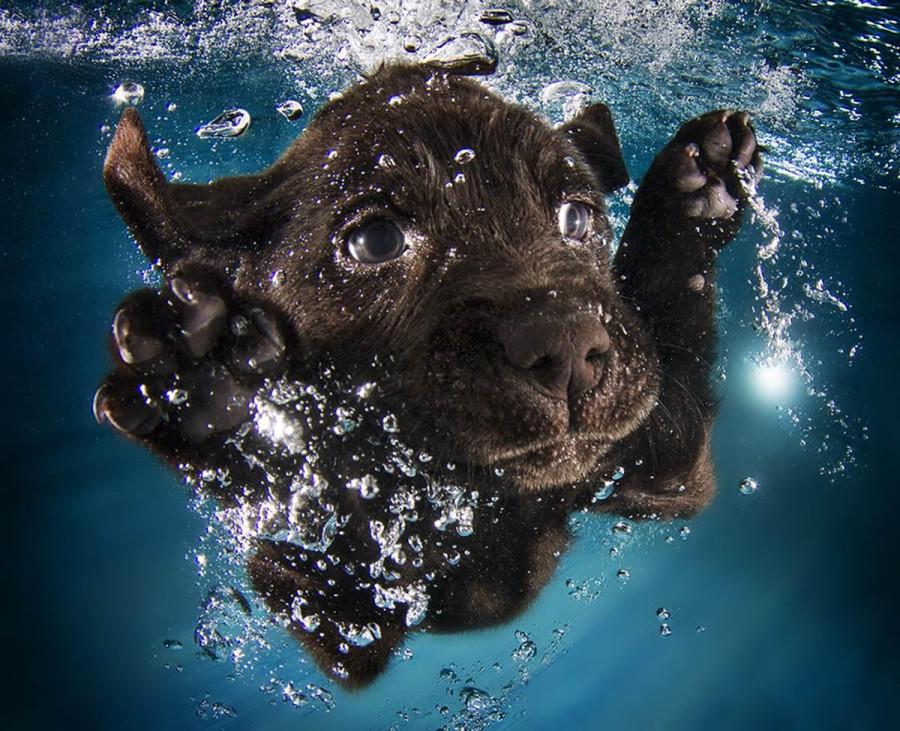 Underwater Puppies Ruger
