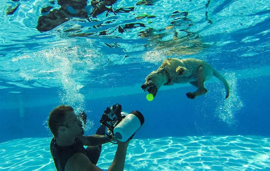 Underwater Puppies Seth Casteel_0