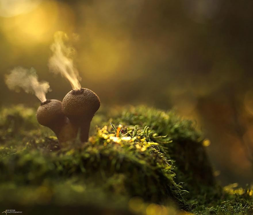 mushrooms-foto_1