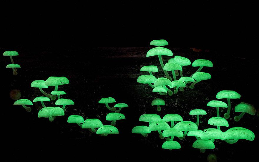 mushrooms-foto_2