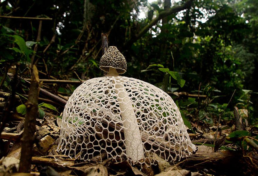 mushrooms-foto_5