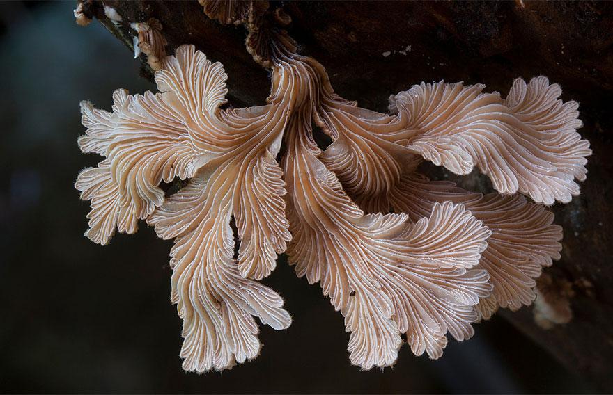 mushrooms-foto_7