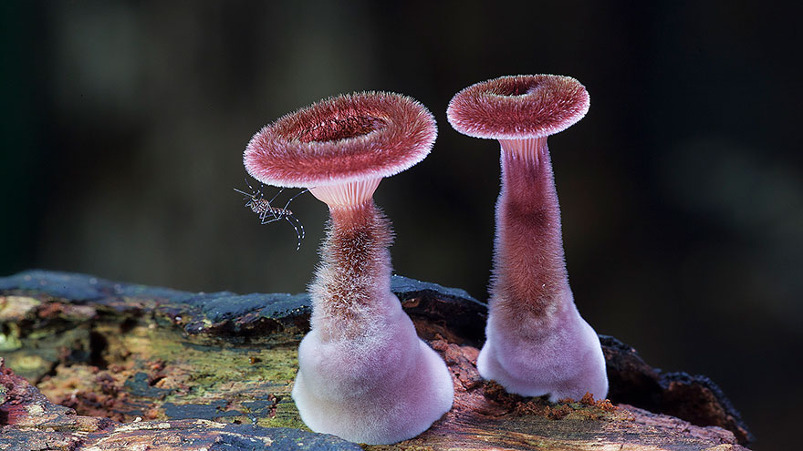 mushrooms-foto_8