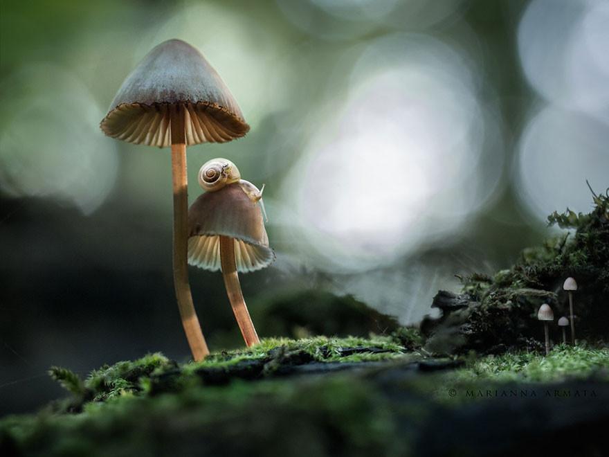 mushrooms-foto_18